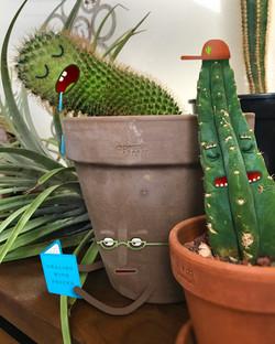 sleepy cactus2