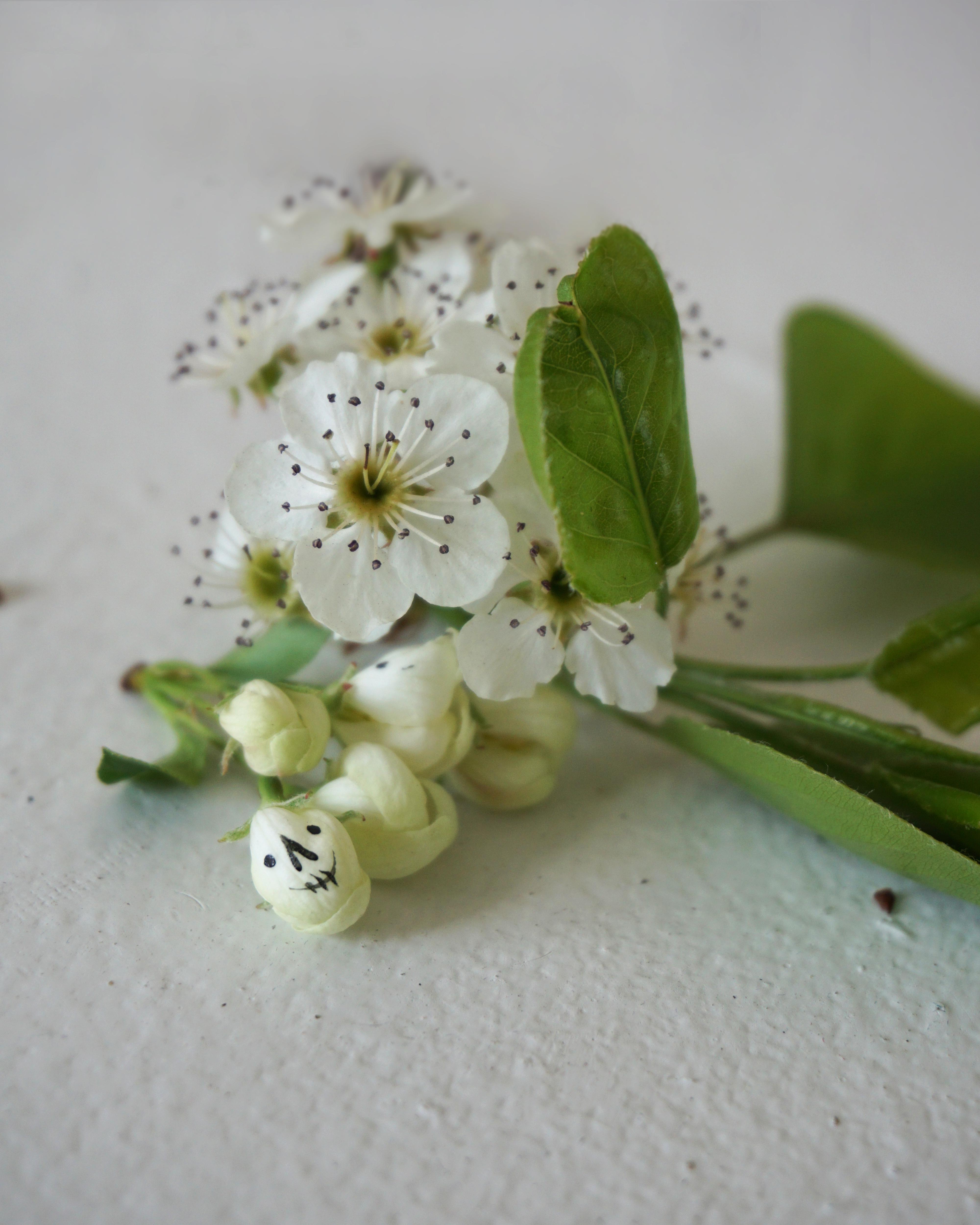 Death Life Flower