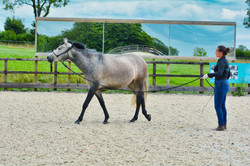 Equine Bowen practitioner gives training