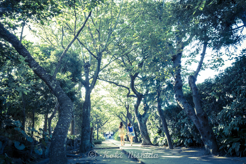 Kamakura japan-1-13.jpg