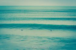 Matarangi beach break5