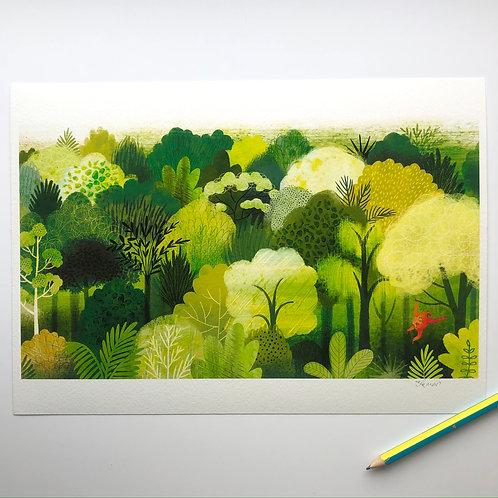 Rainforest A4 Signed Artist Print