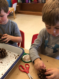 oakview students pinecone project
