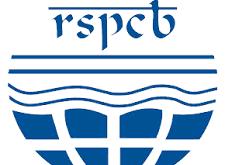 RSPCB   RSPCB Recruitment 2021   Latest Govt Jobs   Rajasthan Govt Jobs   Sarkari Naukri   Sarkari