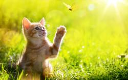 tamara - kitten watching butterfly