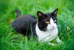 tamara - black and whit cat