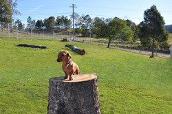 scentral our new dog play area