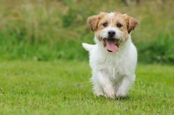 Dogs Love Aussie Pet Resort
