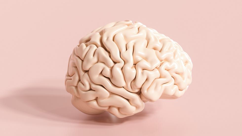 Nutrición sin filtro 2: Eje intestino-cerebro
