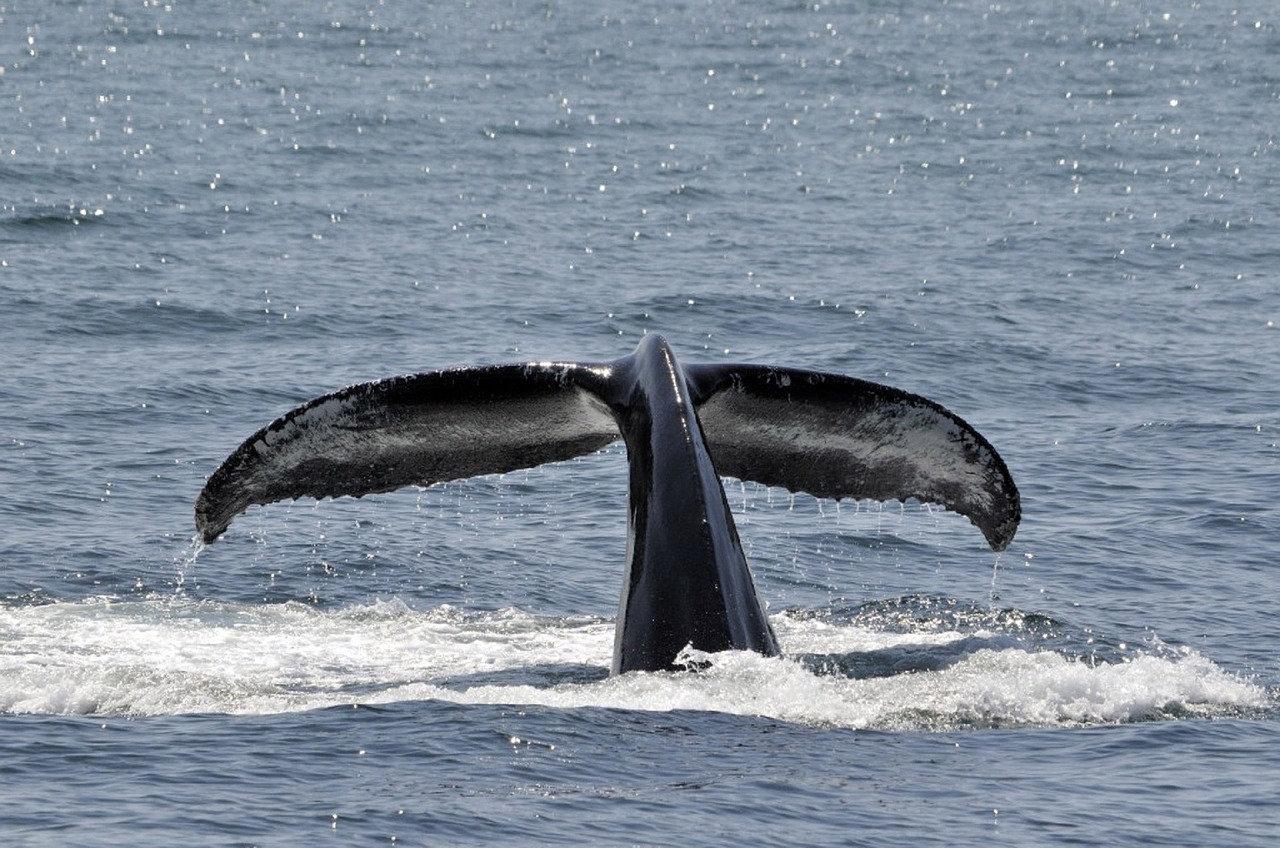 Seasonal Whale Watching