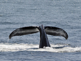 East London  granted first whale watching permit