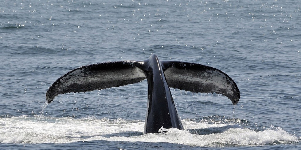 Whale Myth Busters