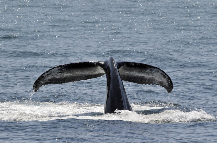 recherche sur les baleines