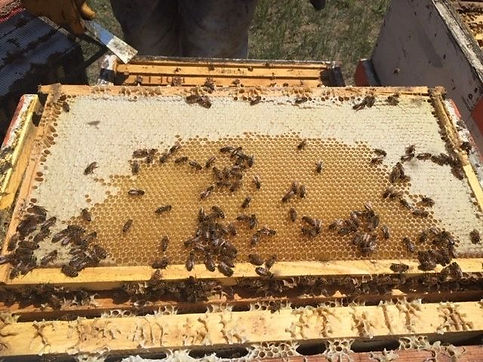 Bee Hive .jpg