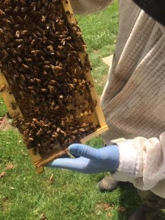 my bees find the queen.jpg