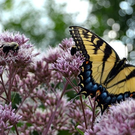 GCC Bee Garden