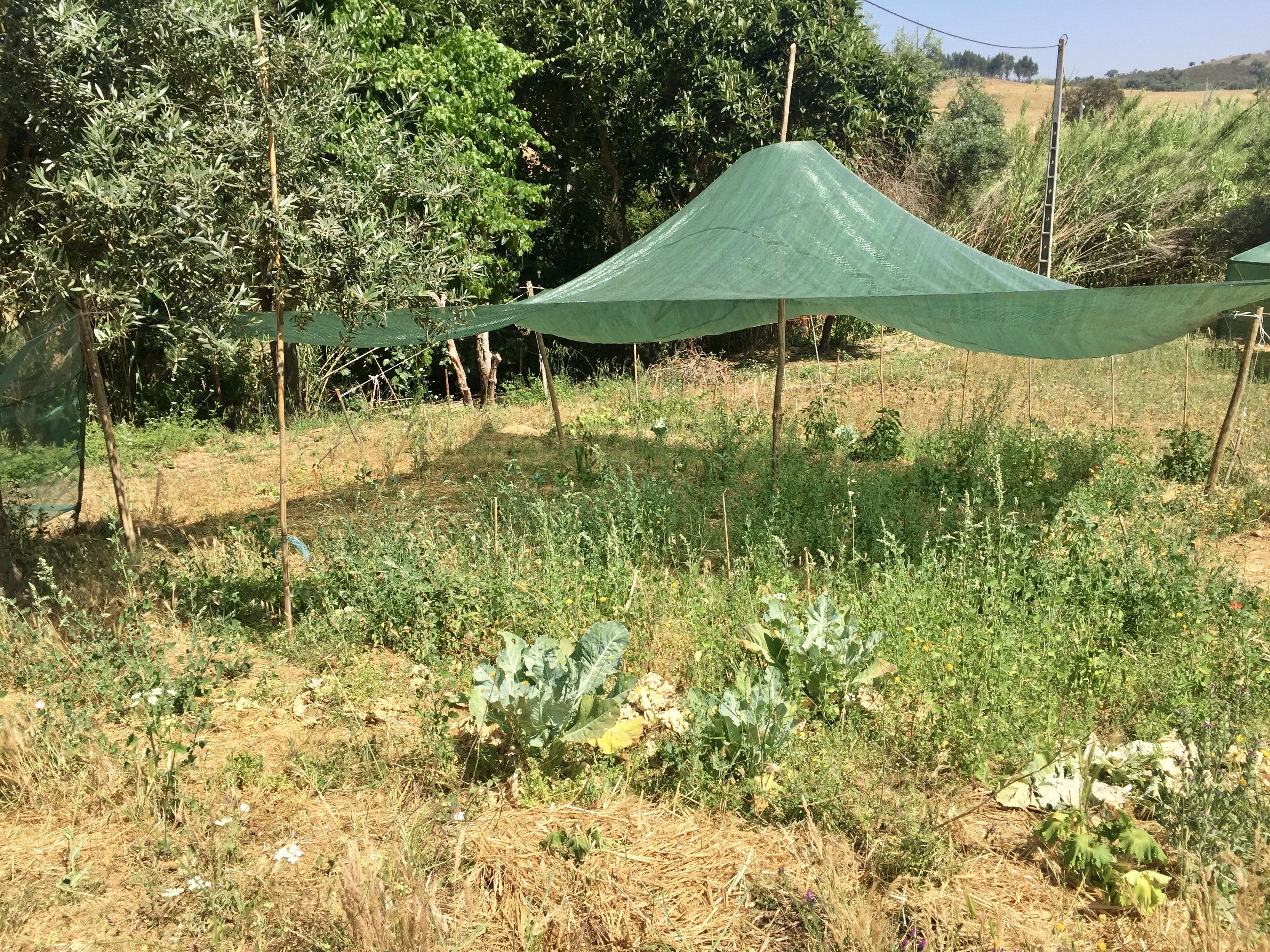 Permakultur Garten Estrafego 2