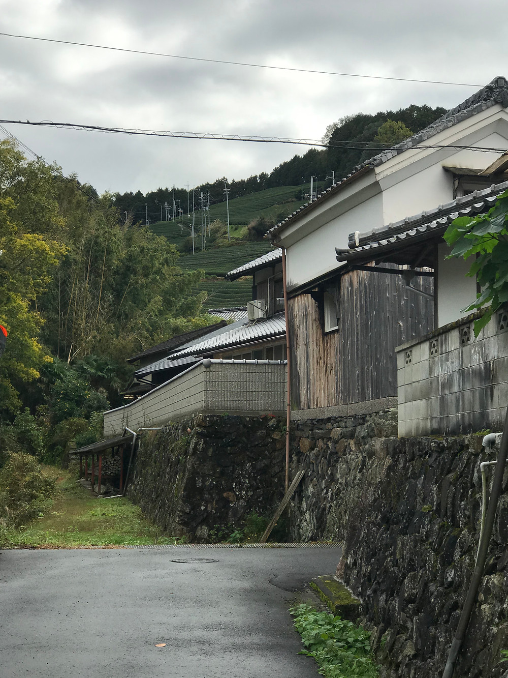 Tea town with Japanese style houses and tea fields
