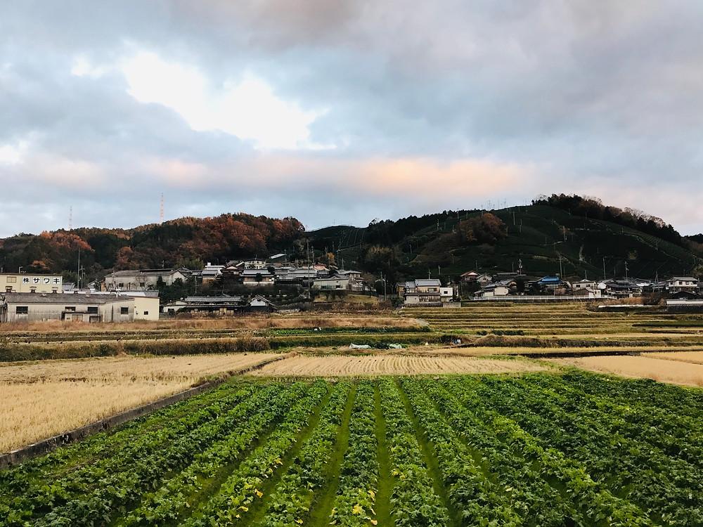 Mt. Kamatsuka tea fields and rice fields
