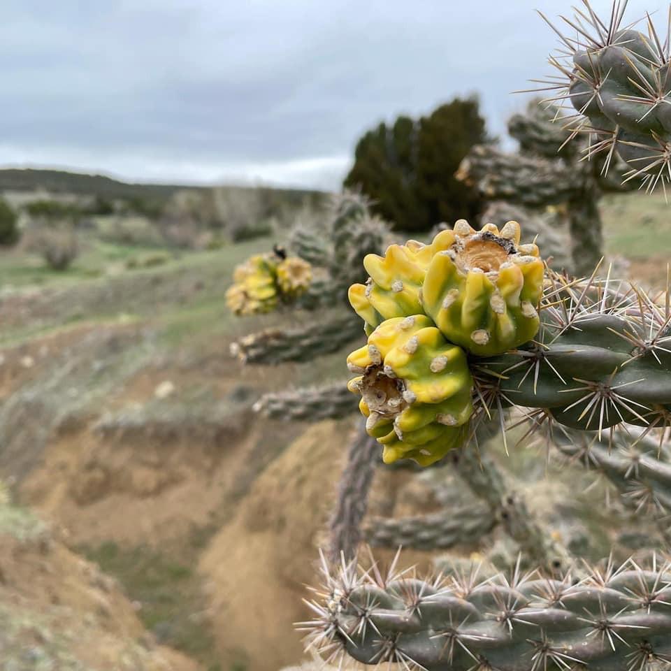 like cactus