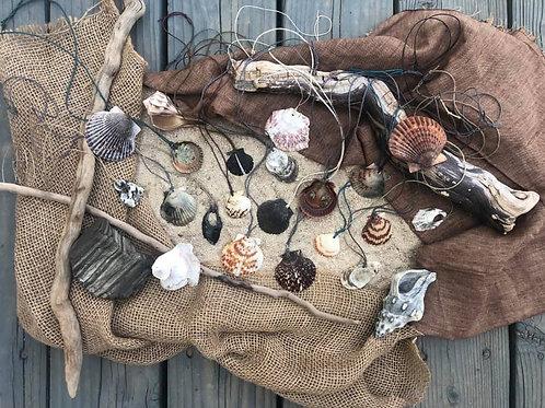 {Choose for Me} Seashells
