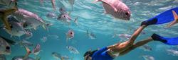 Snorkelling Activites