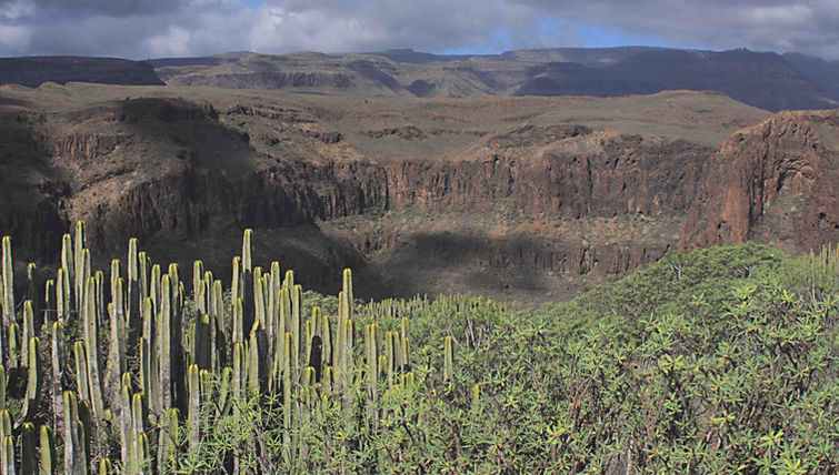 Euphorbias an mountain scenery on Gran Canaria