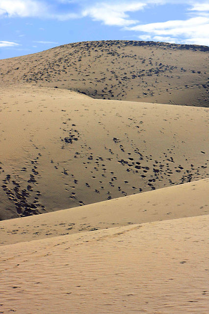 The Sand dunes at Maspalomas