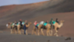 Camel trekking near Timanfaya Lanzarote in the Canary Islands