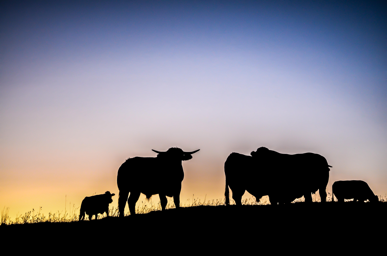 Reines des Alpages