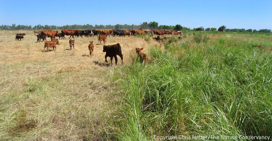 Rotaional grazing
