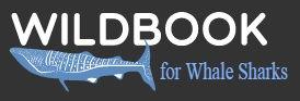 Wildbook Whaleshark.jpg