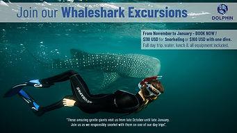 Whaleshark day trips.jpg