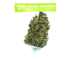 Berry Scout.jpg