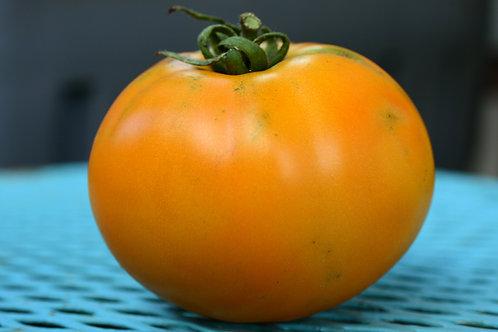 Woodle Orange (Plant)