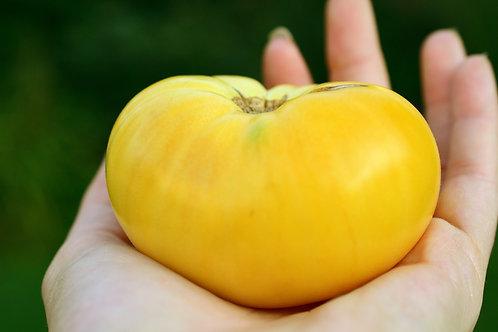 Dagma's Perfection (Seeds)