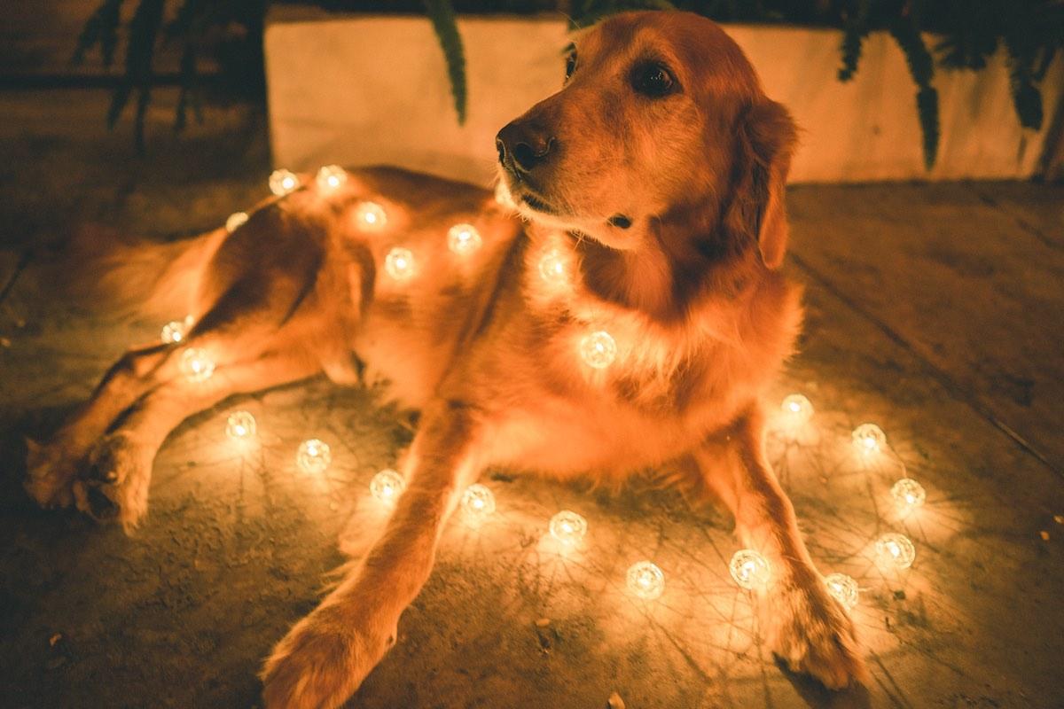 Malda, the Resident Dog