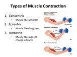 The 3 Types of Muscle Contractions