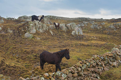 Donegal - Horses