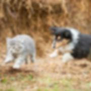 Kat og hund løber