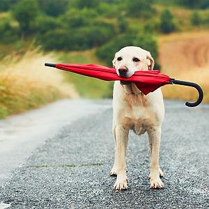 Hjælpsom hund