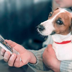Hold nu op med at kigge telefon siger hunden