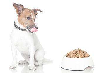 Sulten hund