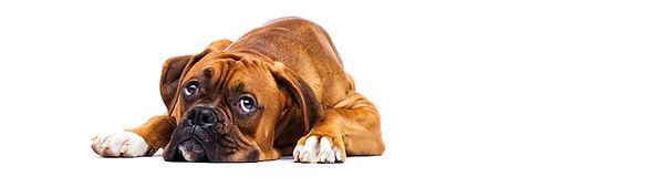 Hund ked af det.jpg