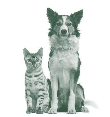 Kat og hund