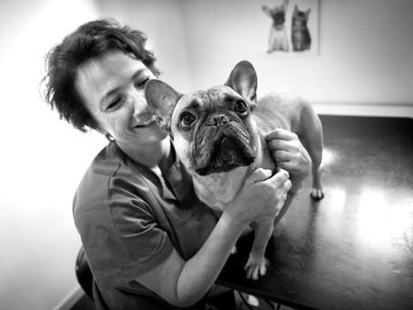 """Allergi-vaccine"" til hund - hvorfor?"