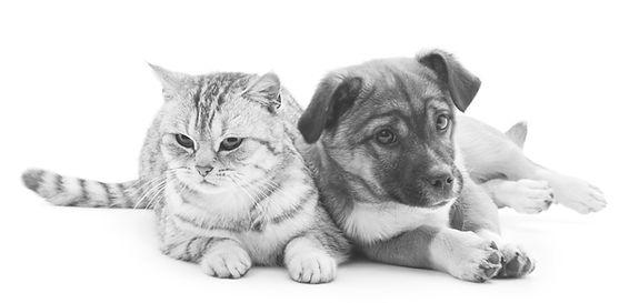 Sød hund og kat