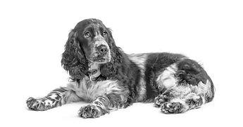 Hygge hund