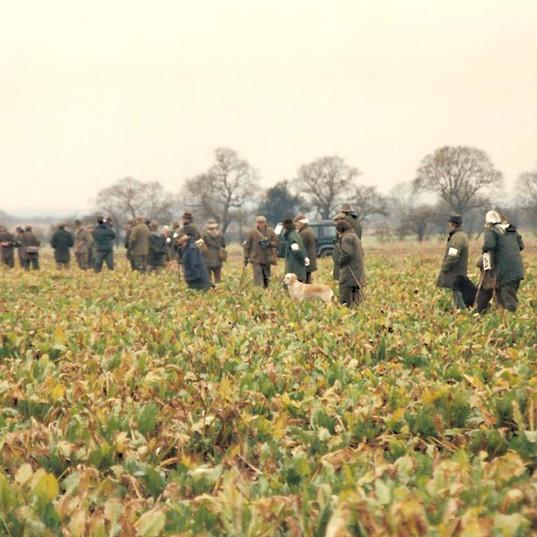 brit fld trl line in beet fld.jpg
