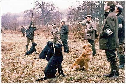 britfldtrl5dogsonpeg.jpg